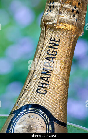 Close view on cold Champagne bottle in wine cooler in alfresco summer garden situation - Stock Photo