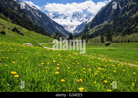 Beautiful landscape with Alps in Stilluptal, Mayrhofen, Austria. - Stock Photo