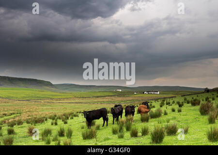 Teesdale, County Durham UK. Tuesday 7th June 2016.  UK Weather.  Storm clouds gathering over hay meadows in the - Stock Photo