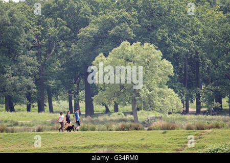 Richmond Park, London, UK. 8th June 2016. A family walk their dog at Richmond Park, where it was a warm and humid - Stock Photo