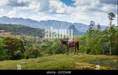 Horse in the Viñales Valley with mogotes - Stock Photo