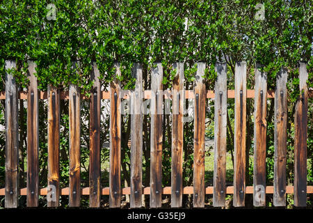 Old wooden fence - Stock Photo