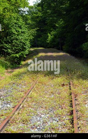 Abandoned railroad track taking off through the forest - Stock Photo