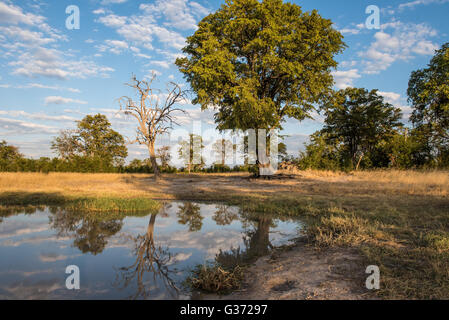 A waterhole near Nehimba in Hwange National park Zimbabwe - Stock Photo