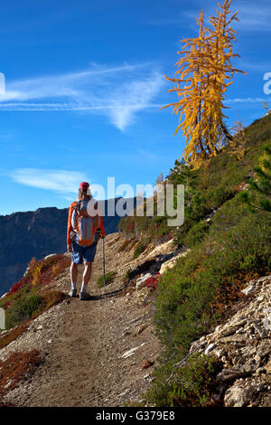 WA12718-00...WASHINGTON - Hiker on the Pacific Crest Trail north of Cutthroat Pass in the North Cascades. - Stock Photo