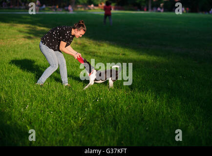 The young woman plays with a dog on a green lawn in park. She tries to pull out a disk of red color from a mouth - Stock Photo