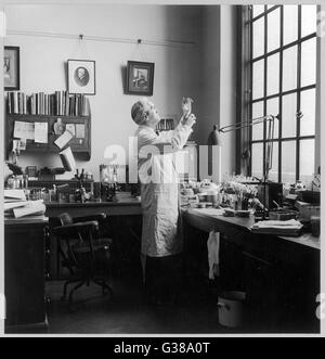 SIR ALEXANDER FLEMING -  Scottish bacteriologist at  work in his laboratory.       Date: 1881 - 1955 - Stock Photo