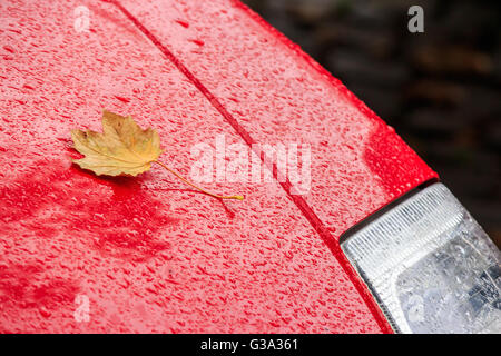 yellow leaf on the wet hood of a red car - Stock Photo