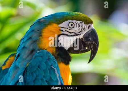 Macaw parrot portrait - Stock Photo