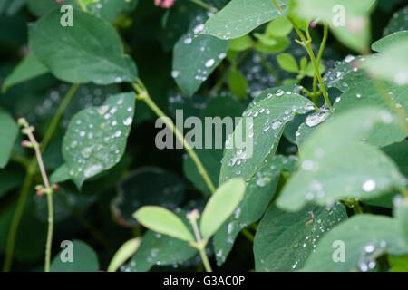 Water droplets falling off leaf, close up macro image - Stock Photo