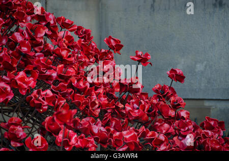 Remembrance Poppies, ceramic work of art by Paul Cummins and Tom Piper, St George's Hall Liverpool. Armistice Day - Stock Photo