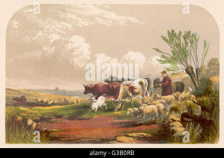 A drover & his donkey leads  his sheep & cattle to graze on  common land.        Date: 19th century - Stock Photo