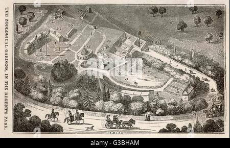 Regent's Park, London : a  bird's eye view of the gardens  of the Zoological Society,  which were opened to Fellows - Stock Photo
