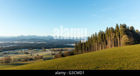 A morning at the Auerberg, Germany, Bavaria, Allgäu, Auerberg, Alps, alpine upland, group of trees, spruce, spruces - Stock Photo