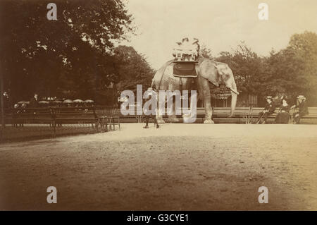 Elephant Ride - London Zoological Gardens, Regent's Park     Date: circa 1905 - Stock Photo