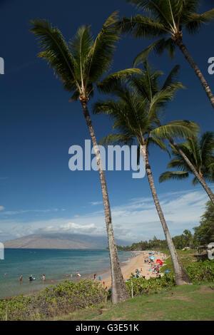 Sun bathers, swimmers, coconut trees, Kama'ole II & III Beach Park, (in distance) West Maui Mountains; Kihei, Maui, - Stock Photo