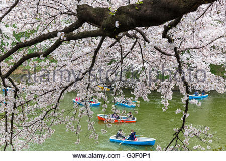 Rowing boats and blossoming cherry trees, channel of the Kitanomaru park in the imperial palace (Chiyoda), Tokyo, - Stock Photo