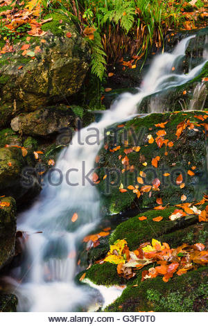 Autumn colours at the wild river La Hoegne, near the High Fens (Hautes Fagnes), autumn, Ardennes, Wallonia, Liege, - Stock Photo