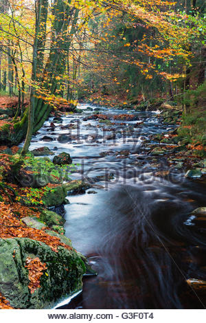 Autumn forest on the wild river La Hoegne, near the moor High Fens, Hautes Fagnes, autumn, Ardennes, Wallonia, Liege, - Stock Photo