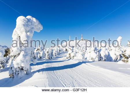 Snow-covered spruces in the skiing area Rukatunturi, Ruka, Nordoesterbotten, Lapland, Finland - Stock Photo