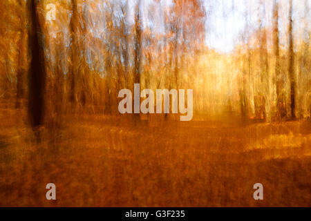 Colourful foliage on a footpath through deciduous forest in autumn, abstract study [M], camera manipulation, colour - Stock Photo