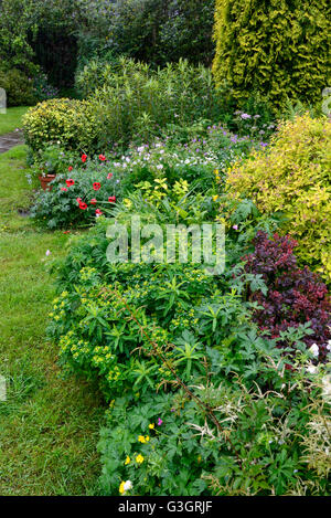 English country garden in early summer with an abundance of plants and flowers. A rainy June day. - Stock Photo