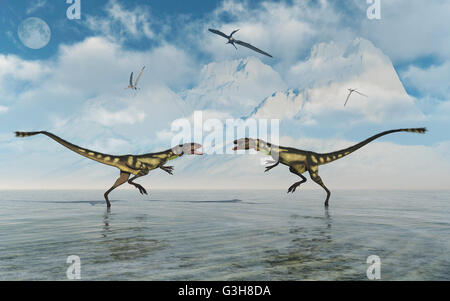 Dilong Dinosaur Confrontation. - Stock Photo