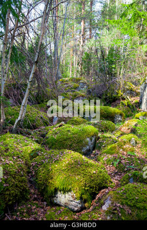 Mossy rocks in a Swedish forest - Stock Photo