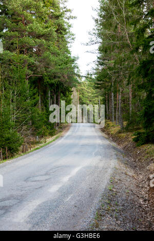 Road going through a thick forest - Stock Photo
