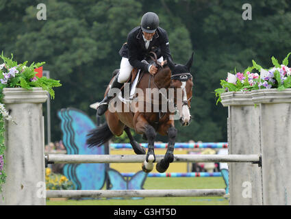 Andrew Nicholson riding Jet Set IV in action in the Equitrek CCI*** Showjumping during day four of the Bramham Horse - Stock Photo