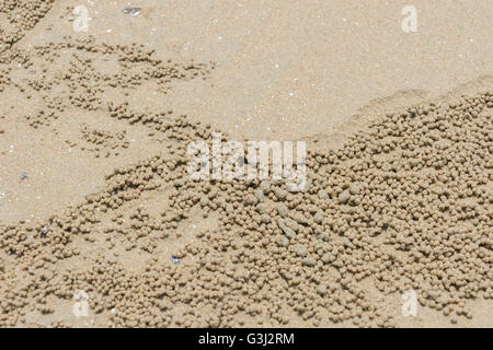 closeup sand bubble crab on the beach - Stock Photo