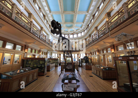 The Interior View Redpath Museum In McGill University Montreal Quebec Canada