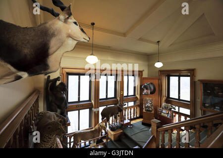 Canada Interior View Of Redpath Museum In McGill University Montreal Quebec
