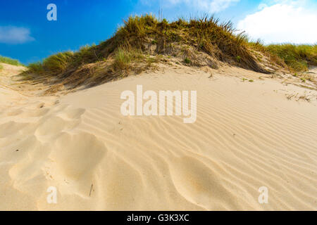 Dunes at Belgian north sea coast against cirrus and stratus clouds and reed grass, near De Haan, Belgium - Stock Photo