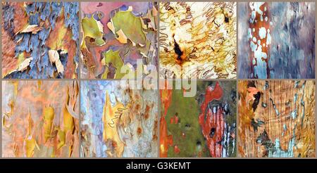 Collage of colorful Australian gumtree (Angophora and Eucalyptus) bark - Stock Photo