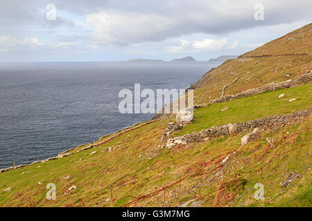 View along the coast  to the Blasket Islands on the horizon, Dingle Peninsula, Co. Kerry, Munster Province, Republic - Stock Photo