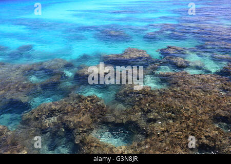 Coral reef in clear ocean water, Christmas Island, Kiribati - Stock Photo