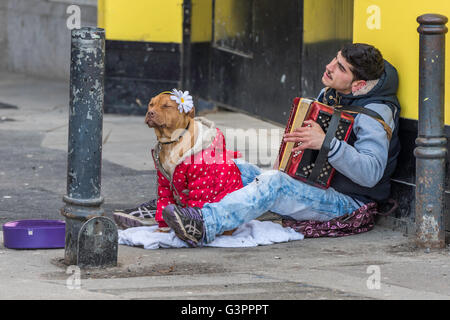Eastern European street entertainer in  London  playing his accordion sitting with his dog , which is wearing a - Stock Photo