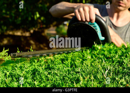 closeup of a young caucasian man pruning a hedge with an electric hedge trimmer - Stock Photo