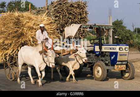 INDIA, in contrast mechanization and tradition, indian Swaraj tractor and bullock cart, two cow with wooden yoke