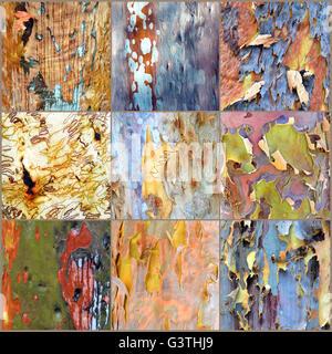 Collage of colorful Australian gumtree (Eucalyptus, Angophora) bark (3x3 panel, pale brown background) - Stock Photo