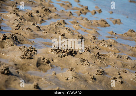 Worm castings on the sand from lugworms. - Stock Photo