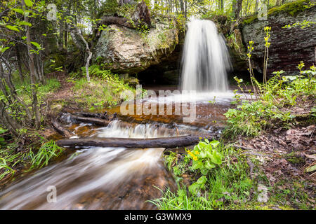 Marsh marigolds spring up in front of Scott Falls. Au Train Michigan - Stock Photo