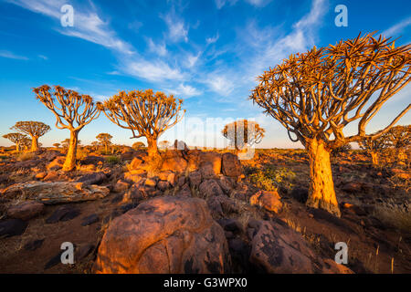 The Quiver Tree Forest (Kokerboom Woud in Afrikaans) is a forest and tourist attraction of southern Namibia. - Stock Photo