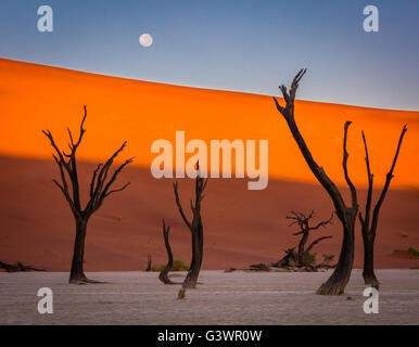 Deadvlei is a white clay pan located near the more famous salt pan of Sossusvlei, inside the Namib-Naukluft Park - Stock Photo