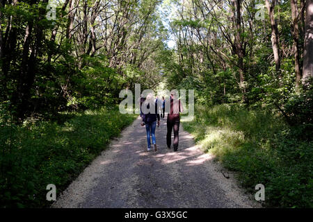 Group of tourists walking in a forest in Chernobyl, Ukraine on 04 June 2016. The Chernobyl accident occurred on - Stock Photo