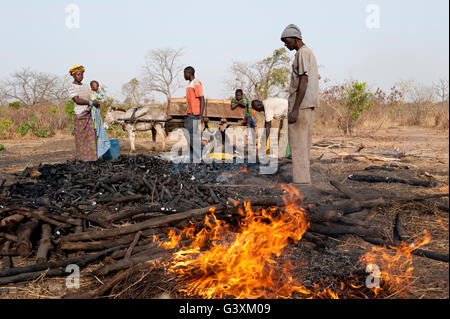 mali production of charcoal from bush wood charcoal is used for stock photo royalty free. Black Bedroom Furniture Sets. Home Design Ideas