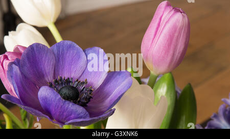bouquet of anemones tulips and hyacinths in purple pink a gift of love and romance - Stock Photo