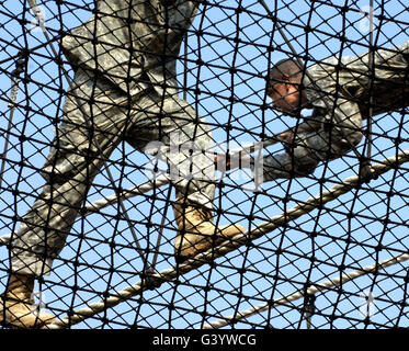 U.S. Army privates compete in the victory tower course during Army basic training. - Stock Photo