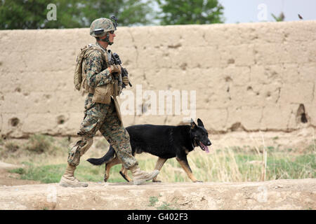 A dog handler of the U.S. Marine Corps. and his military working dog on patrol. - Stock Photo